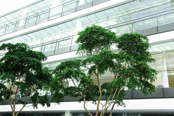 hub-tree